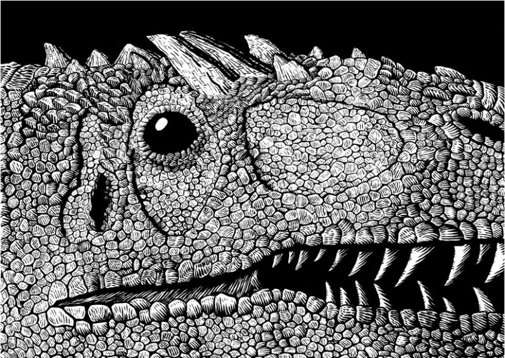 2D Black and White Allosaurus Dinosaur Illustration