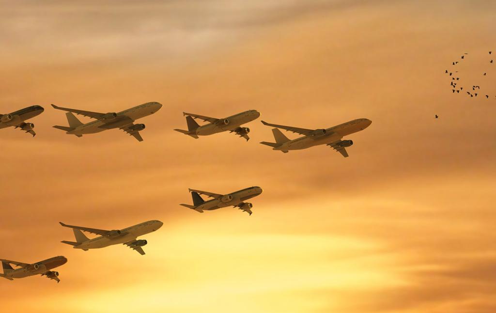 3D Aeroplane Migration Illustration Thumbnail