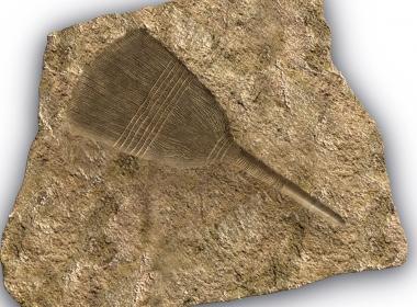 3D Brush Fossil Illustration Thumbnail