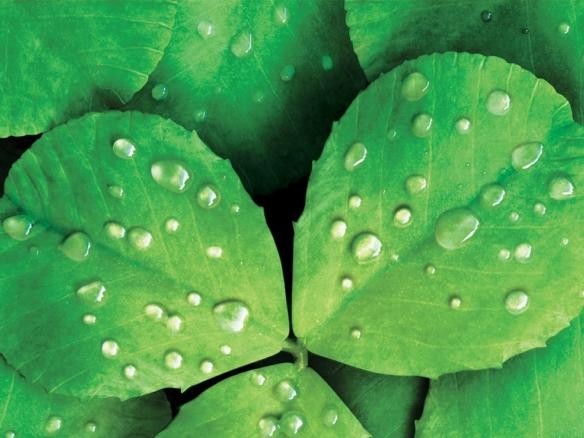 3D liquid illustration aloe vera leaves with droplets