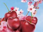 3D Cherry Blossom Illustration Thumbnail