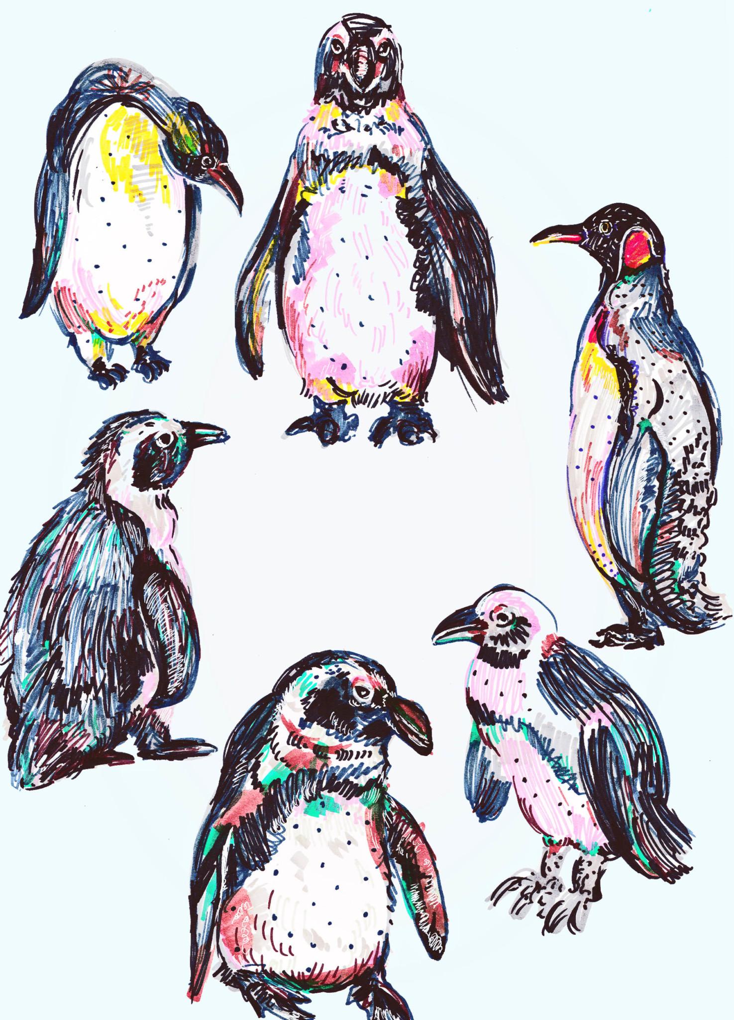 2D Penguin Collection Illustration