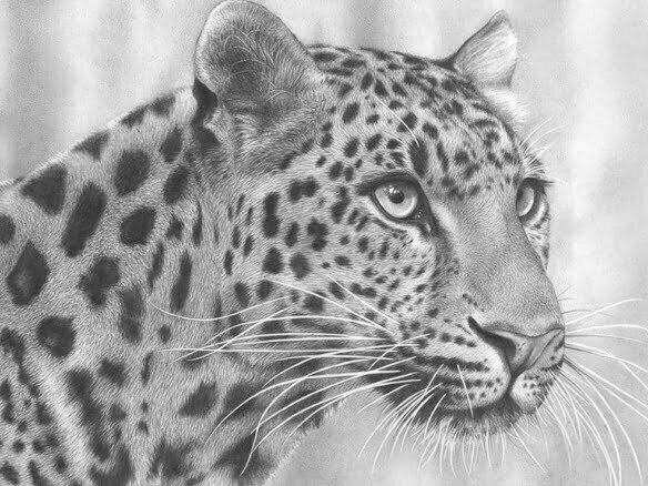 2D Cheetah Realistic Pencil Creature Illustration Thumbnail