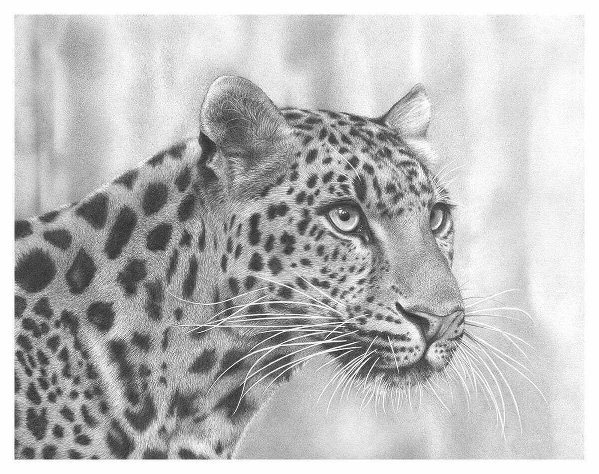 2D Cheetah Realistic Pencil Creature Illustration