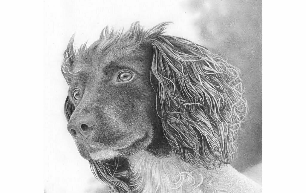 2D Dog Realistic Pencil Creature Illustration Thumbnail