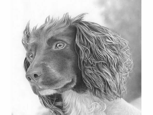 2D Dog Realistic Pencil Creature Illustration Thumbnail