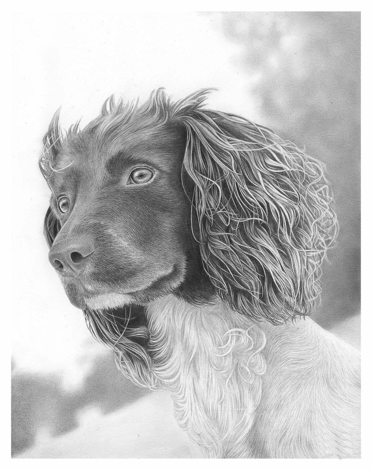 2D Dog Realistic Pencil Creature Illustration