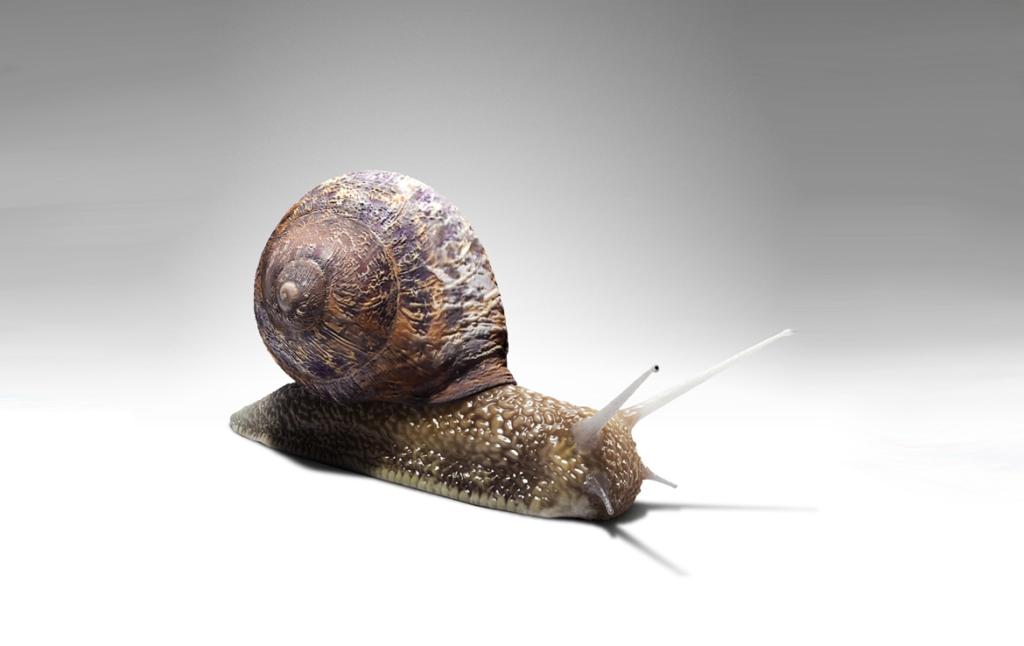 3D Garden Snail Creature Illustration Thumbnail