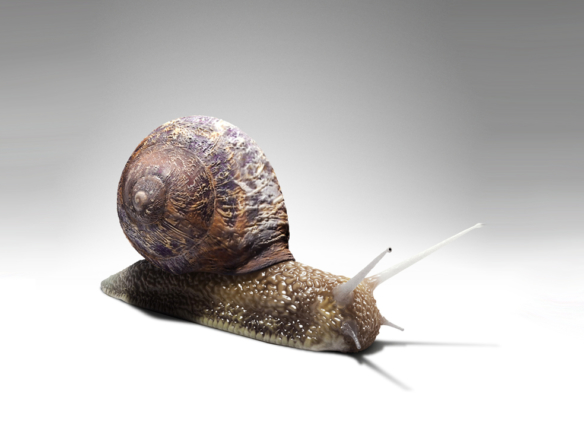 3D Garden Snail Creature Illustration Thumbnail