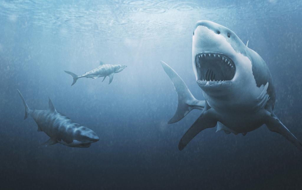 3D Great White Sharks Creature Illustration Thumbnail