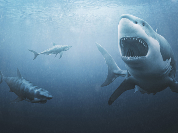 3D Great White Sharks Creature Illustration Thumbnail