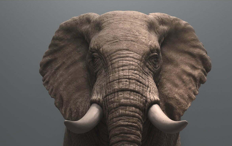 3D Elephant animal Illustration