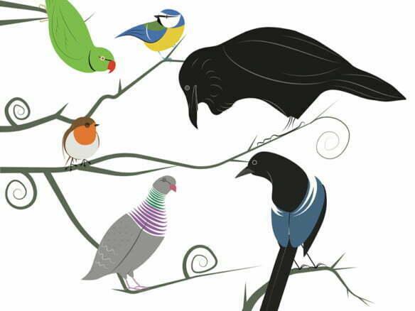 2D Illustration Birds of Hampstead Heath